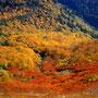 山がこれほどまでに染まるのはなぜだろう。そんな疑問を感じてしまうほどに、北海道の紅葉は美しい。自然は人間を楽しませようとしているに違いない。それは献身的と言えるほどの一方通行だ。<大雪山>
