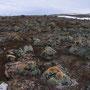 北極圏の石は意外とカラフルだった? 雪と凍土のまだら模様の大地が、壮大に広がる景色。ノルウェー最北限の半島を走るバスの乗り継ぎ時間で、道路から原野に入って撮った写真。<Varangerhalvoya-NORWEY>
