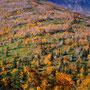さまよいたくなる秋の森。実際は笹が深くてなかなか歩けない。紅葉の最高潮は過ぎているが、葉が落ちたために見える木の白い肌が、幻想的な雰囲気を見せている。<大雪山トムラウシ周辺>