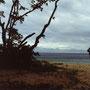 楽園にたった一人でいる気分。全国から風来坊たちが集まってくる南風見田の浜のさらに奥、                      ボーラ浜は、ほとんどの時間、僕のプライベートビーチだった。                        西表島 ボーラ浜 沖縄