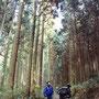 日本の風景と言えば、杉林の峠道。いにしえの旅人たちに思いをはせる。  木曽路 旧中仙道 長野