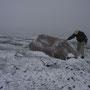 雪は次第に強くなり、夜中、吹雪に変わった。半端な装備と覚悟の旅人なら、凍死する危険もある。こんな場所で野宿する「旅人」も、そうはいないだろうが。僕は自分を登山者だとは思っていない。<Matterhorn-SCHWEIZ>