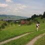 前回の旅でも来た散歩道。まるで六ヶ月の旅の末に、大きな輪を描いて戻ってきたようだ。思えばこの道を歩いたときから、ヨーロッパの旅は素晴らしいと確信したのだ。嗚呼、我が放浪!<Vierwald-Statter See-SCHWEIZ>