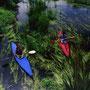 水草が川の流れを描いている。この素晴らしい川も、ここからすぐ下流で合流する排水のため、台無しにされている。矛盾にも、美々川が注ぎ込むウトナイ湖は、ラムサール条約登録湿地である。<美々川>