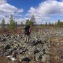 ラップランドの原野に進んでいく、全長53kmのトレッキングコース。このあたりはまだ入口付近。Inariからほんの少し緯度を上げただけで、途端に大きな木がなくなる。<Sevettijarvi-FINLAND>