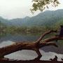 ひっそりとした湖というものは、何か物語的な感じがするものだ。倒木に座り、景色を映す湖面を見れば、森の中から鹿の声。 西ノ湖 栃木