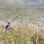 枯野原の微妙な色彩は、まさしく日本の美と言えるだろう。                                     枯草を掻き分けて歩けば、いにしえの旅人の気分。――夢は枯野を駆け巡る。                      曽爾高原 奈良