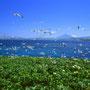 これが憧れの空と海。日本最北限の無人島は、海鳥たちの楽園でもある。日差しあふれる鮮やかな景色を見ていると、自分の心までもが鮮やかな色になっていくようだった。<トド島>