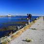 コンクリート堤防にはなぜかしら旅愁が漂う。亀裂からたくましく芽を出し咲く花がいい。船着場には漁民の姿が見られるが、堤防には釣り人もいない。白昼の哀愁の中に、ただ一人。<Lofoten-NORWEY>