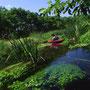 水草そよぐ清流を、探検気分で遡上していく。写真が斜めになっているのは、カメラを木の枝に縛り付けて撮影したため。こんな川が、日本では今、ものすごく貴重になっている。<美々川>