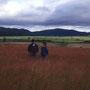 なんでもない草地が、やけに僕の心に美しく映るのはなぜだろう。こんな草地が、いつまで日本にあるだろう。<北竜町>