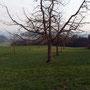 Heschtert Ellenberg März 2014