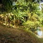 Freehold land for sale North Sanur, Bali.