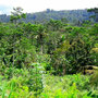 Freehold land for sale located in East Bali.