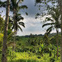 Land for sale Bali, located in Tabanan.