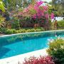 Lovina villa for sale