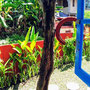 2 bedroom affordable house for sale in Canggu, South Bali.