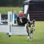 12.NRW Flyball Cup/4. Lauf (Finale)/Borken/01.09.2013/Quickstep!