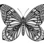 -Title: Butterfly 03 -Size: H148xW100 -Material: pigment ink on Illustration board