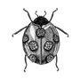 -Title: 7 Stars Ladybug -Size: H175xW125(oval) -Material: pigment ink on Illustration board