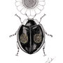 -Title: 2 Stars Ladybug -Size: H170xW130(oval) -Material: pigment ink, Resin, Brass Foil on Illustration board