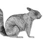 -Title: Squirrel -Size: H220xW105 -Material: pigment ink on Illustration board