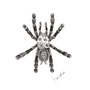 -Title: Tarantula -Size: H200xW150(oval) -Material: pigment ink, Resin, Brass Foil on Illustration board