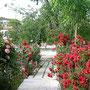 ギョレメのゲストハウス、ウォールナッツハウスの庭