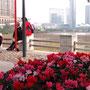 タイパ・ハウス・ミュージアムからの眺め