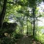 Waldweg zum Ebenstein