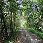 Waldweg ab Untergriesbach zum Griesebach