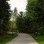 Ambiance des allées des Trois Forêts