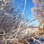 ~ Bild: Frostige Zweige ~