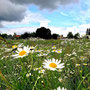 ~ Bild: Frühlingsfelder ~