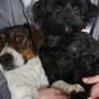 Bobu adopté par Brigitte