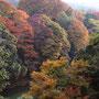 永源寺ダム付近の紅葉