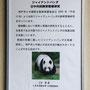 ジャイアントパンダの説明(神戸市立王子動物園)
