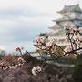 姫路城(公園側より)