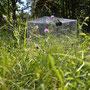 ecosystem respiration chamber in grassland