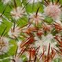 Primordios florales abril