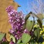 Floración, abril
