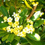 Flores, mayo