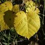 Color otoñal, noviembre