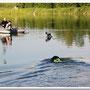 лабрадоры плавают очень быстро.Нирча уточняет правильно ли она все делает