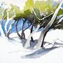 Wald am Kap - Seaside