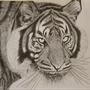 Adam Fernando: Tiger