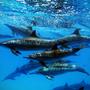 Delfines del Acuario
