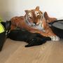Puppy mit Tiger