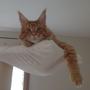 Léon veille du haut de son perchoir