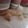 Léon en pleine extension, sur le canapé